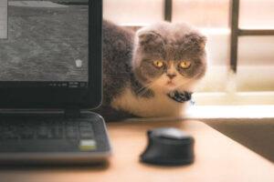マウスが動かないときの解決方法